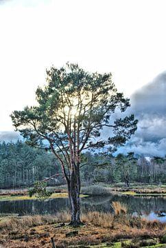 Een alleenstaande boom tegen een dreigende lucht. van Jurjen Jan Snikkenburg