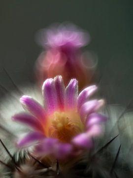 Cactus in bloei van Martijn Wit