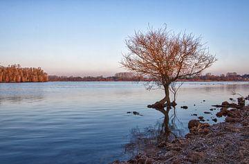 ijskoud eenzaam boompje von marleen aerts