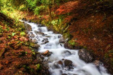 Little forest stream van Nicc Koch