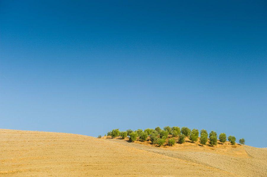 Olijfbomen op de Toscaanse heuvels