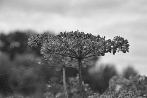 Blume in Schwarz-Weiß
