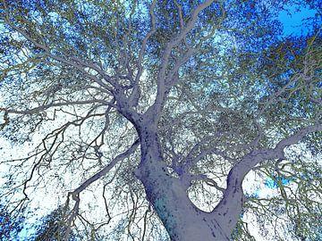 Tree Magic 119 - Nightfall! van MoArt (Maurice Heuts)
