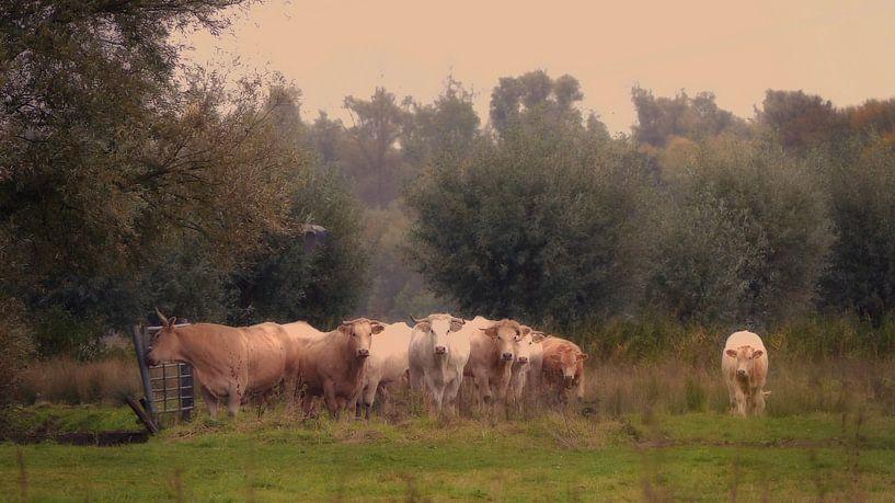 Hollands Landschap van Bert Seinstra