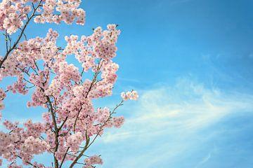 Blue and blossoms von Alessia Peviani