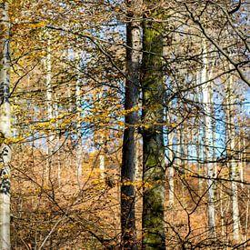 stammen in herfstbos van Hanneke Luit