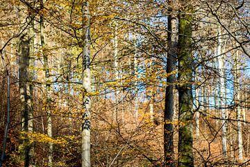 stammen in herfstbos van