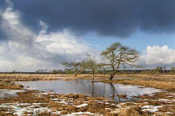 Ven op de Heide  von Ingrid Van Damme fotografie