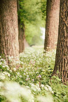 Fluitenkruid tussen de bomen van Mayra Pama-Luiten