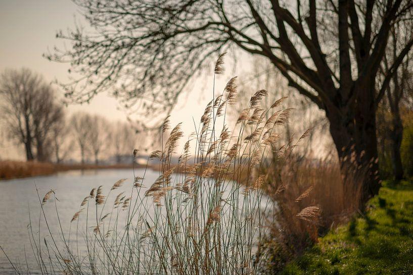 Biesbosch van Rob van der Teen