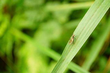 Fliege auf Grashalm - Nahaufnahme von ViLa