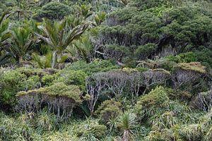 Regenwoud bij de Pororai Rivier in Nieuw Zeeland