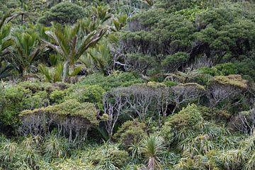 Forêt pluviale sur le fleuve Pororai en Nouvelle-Zélande sur Aagje de Jong