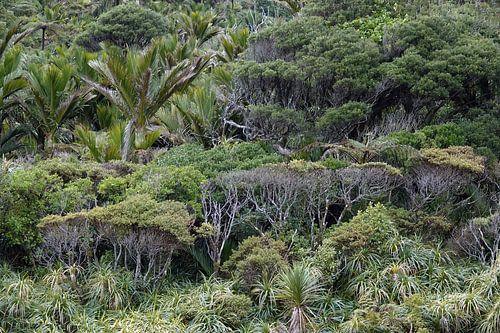 Regenwoud bij de Pororai Rivier in Nieuw Zeeland van