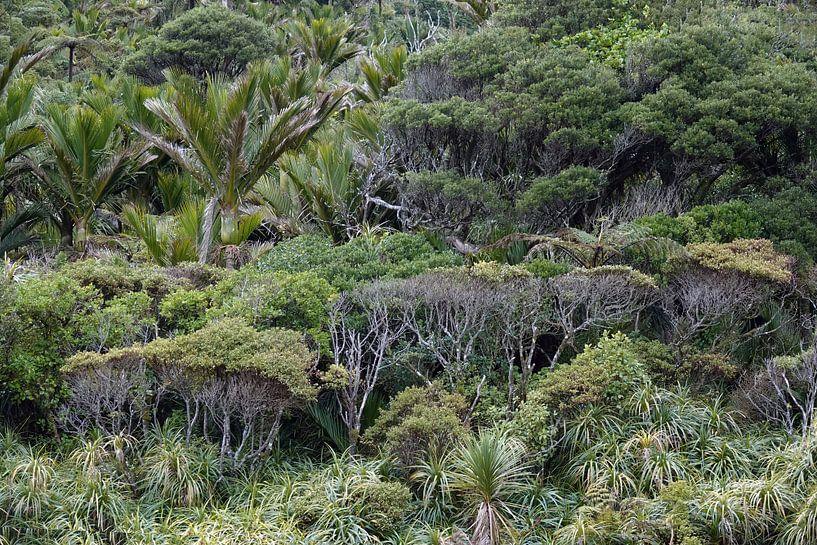Regenwoud bij de Pororai Rivier in Nieuw Zeeland van Aagje de Jong