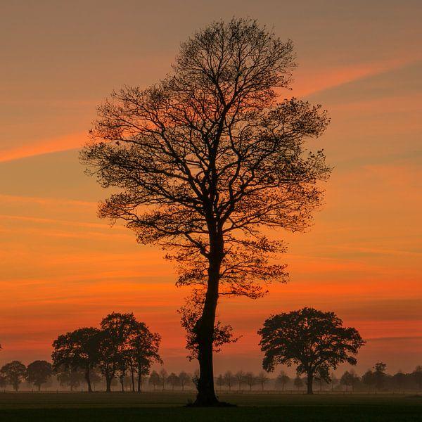 Sunset Tree van Martin Podt