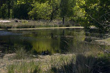Landschap 8