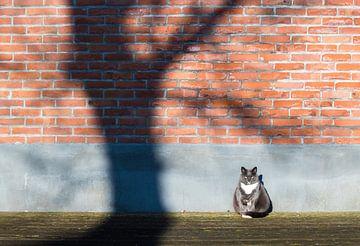 Katze in der Sonne von Inge van den Brande