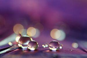 Violet drops van