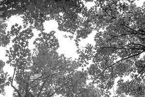 Bladerdak zwart wit van Niek Traas