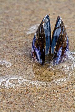 Moule sur la plage de la mer Baltique sur Holger Felix