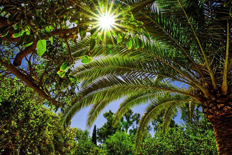 Palm bladeren en groene bladeren met zonnestralen en blauwe lucht. van Edith van Aken