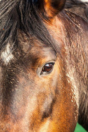Paardenhoofd van Marcel Derweduwen