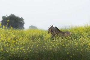 Utrechtse Heuvelrug-wilde paarden bij Palmerswaard 01