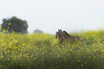 Utrechtse Heuvelrug-wilde paarden bij Palmerswaard 01 von Cilia Brandts