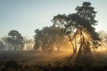 Sonnenlicht in den Bäumen von Hetwie van der Putten