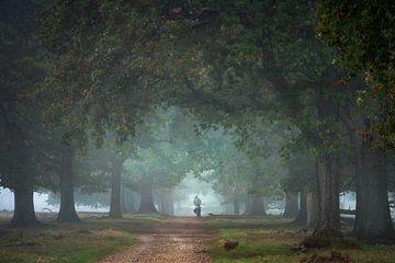 Eenzame fietser in het eikenbos van Jeroen Lagerwerf