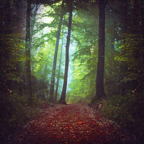 Foggy Forest van Dirk Wüstenhagen