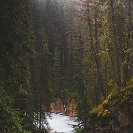 Herfst waterval van Joris Pannemans
