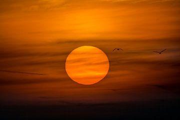 Ein Flug zur Sonne von Julien Beyrath