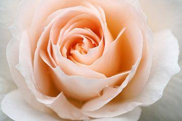Roos van Marcel te Brake