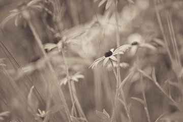 Blumen Teil 193 von Tania Perneel