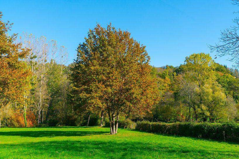 Bäume in einem Park auf einem Feld in Nordfrankreich von Ivo de Rooij