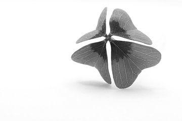 Vierblättriges Kleeblatt schwarz-weiß von J..M de Jong-Jansen