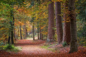 Fußweg durch den Wald mit schönen Herbstfarben von Cor de Hamer