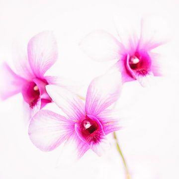 Orchids von Tonia Beumer
