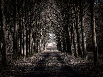 Wald von Henk Leijen
