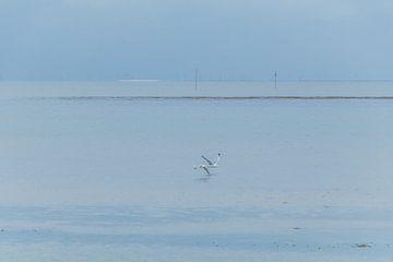 Meeuwen boven de zee van Marianne Twijnstra-Gerrits
