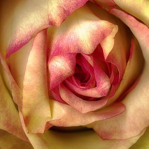 The Pink Hearted aux naturel.