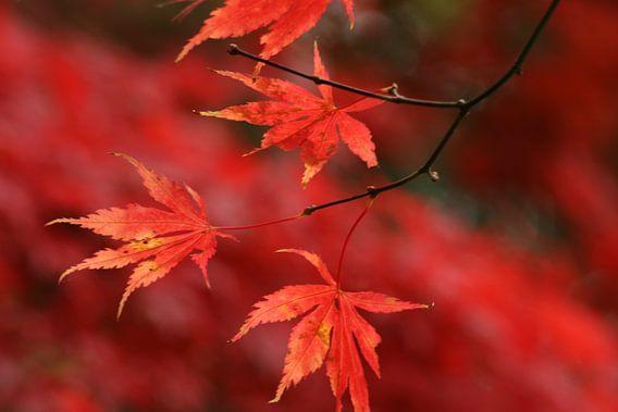 Herfst van Carla Mesken-Dijkhoff