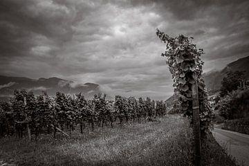 Wijnranken in de wolken van Stephanie Verbeure