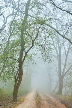 Zandweg met groen wordende boom in de mist van Jenco van Zalk