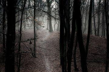 WEG AUF DEM HÜGEL von Algon Photography