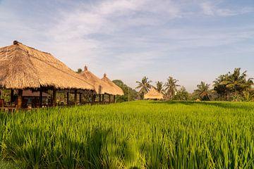 Reisfelder bei Ubud, Bali (Indonesien) von Maarten Brakkee