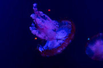Lichtgevende blauwe kwal in de donkere zee van