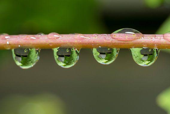 druivenblad gevangen in waterdruppels